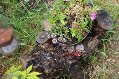 Het bloeien het pottenroze bloeit a stock foto's