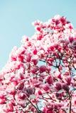 Het bloeien seizoen royalty-vrije stock afbeelding