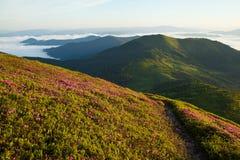 Het bloeien van bergen bij dageraad royalty-vrije stock foto