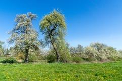 Het bloeien van bomen en struiken royalty-vrije stock fotografie
