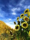 Het bloeien van de zomer Royalty-vrije Stock Foto's