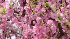 Het bloeien van fruit en wilde bloemen in de lente HD stock videobeelden