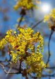 Het bloeien van geel de lenteporie stock afbeeldingen