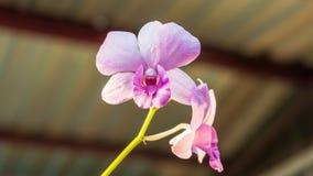 Het bloeien van mooie orchideeën tijdens zonsondergang stock afbeeldingen