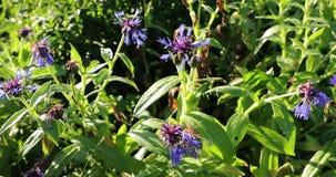 Het bloeien van vegetatie met heldere kleuren in de zomer stock footage