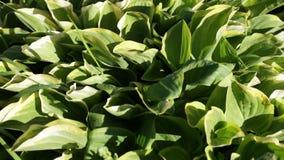 Het bloeien van vegetatie met heldere kleuren in de zomer stock video