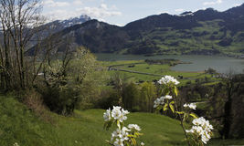 Het bloeien van Zwitserland Royalty-vrije Stock Afbeelding