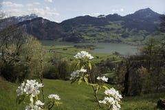 Het bloeien van Zwitserland royalty-vrije stock fotografie