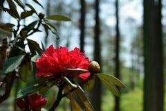 Het bloeien wildflowers Royalty-vrije Stock Afbeeldingen