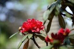 Het bloeien wildflowers Stock Afbeelding