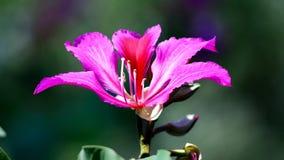 Het bloeien wildflowers Royalty-vrije Stock Foto's