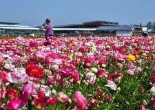 Het bloeien wildflowers, kleurrijke boterbloemen op een kibboets in zuidelijk Isra?l royalty-vrije stock foto's