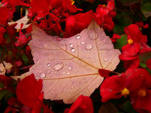 Het bloembed van de herfst Royalty-vrije Stock Afbeelding