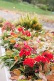 Het bloembed van de herfst Stock Foto