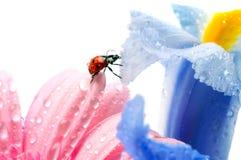 Het bloemblaadje van de bloem stock afbeeldingen