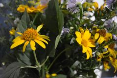 Het bloemboeket van mooie wilde Oekraïense wildflowers maakte met een ziel van het steppedeel van de Oekraïne stock afbeeldingen