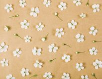 Het bloemendiepatroon van de witte lente wordt gemaakt bloeit en knoppen op pakpapierachtergrond Vlak leg stock foto