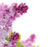 Het bloemenframe van de lente Stock Afbeeldingen