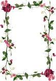 Het bloemenframe van rozen en van bladeren Royalty-vrije Stock Afbeeldingen