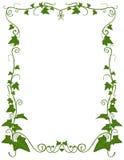 Het bloemenmalplaatje van de klimop Royalty-vrije Stock Fotografie