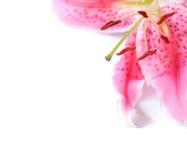 Het bloemenmalplaatje van de lelie Stock Afbeelding