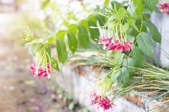 Het bloemroze is tot bloei komend langs de weg stock foto's