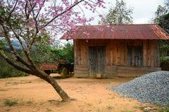 Het blokhuis met perzikboom in Phan belde, Vietnam royalty-vrije stock foto's