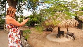 Het blonde Meisje neemt Foto's van Antilopen in Dierentuin Openluchtkooi stock footage