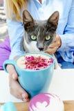 Het blondemeisje in jeansoverhemd houdt een kop van aromacappuccino Kat die een camera onderzoeken Royalty-vrije Stock Afbeelding