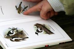 Het boek van de vogel Stock Fotografie