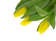 Het boeket dat uit drie gele tulpen bestaat. Stock Afbeelding