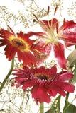 Het boeket van bloemen Stock Afbeeldingen