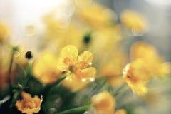 Het boeket van boterbloemen sluit omhoog Stock Afbeelding