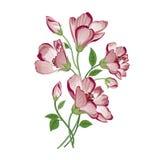 Het boeket van de bloem Bloemen frame Bloei groetkaart Het bloeien F Stock Afbeeldingen