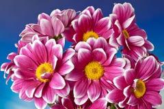 Het Boeket van de chrysant Royalty-vrije Stock Afbeelding