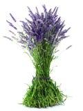 Het boeket van de lavendel Stock Afbeelding