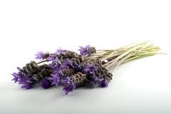 Het boeket van de lavendel royalty-vrije stock afbeeldingen