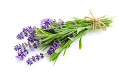 Het boeket van de lavendelbloem op een wit Stock Afbeeldingen