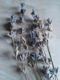 Het boeket van de lavendelbloem op een witte achtergrond stock foto