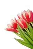 Het boeket van de lente Royalty-vrije Stock Foto