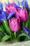 Het boeket van de lente Stock Fotografie