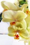 Het boeket van de orchidee royalty-vrije stock fotografie