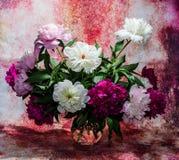 Het boeket van dertien helder Bourgondië, schrijft roze en witte peon in stock afbeeldingen