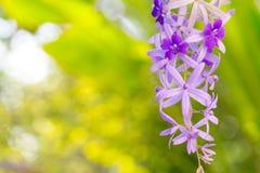 Het boeket van gebieds violette bloemen Het mooie natuurlijke bloemconcept royalty-vrije stock foto