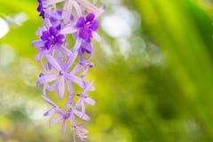 Het boeket van gebieds violette bloemen Het mooie natuurlijke bloemconcept stock foto