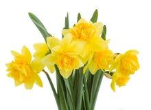Het boeket van gele narcissen sluit omhoog stock afbeelding