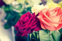 Het boeket van kleurrijke rozen sluit omhoog Stock Foto's
