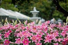 Het Boeket van leliesbloemen in de tuin enkel Geregend stock afbeeldingen