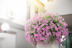 Het boeket van Petuniabloemen zette op de bovenkant van concrete polen, Huis Royalty-vrije Stock Afbeelding