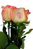Het boeket van rozen Royalty-vrije Stock Fotografie